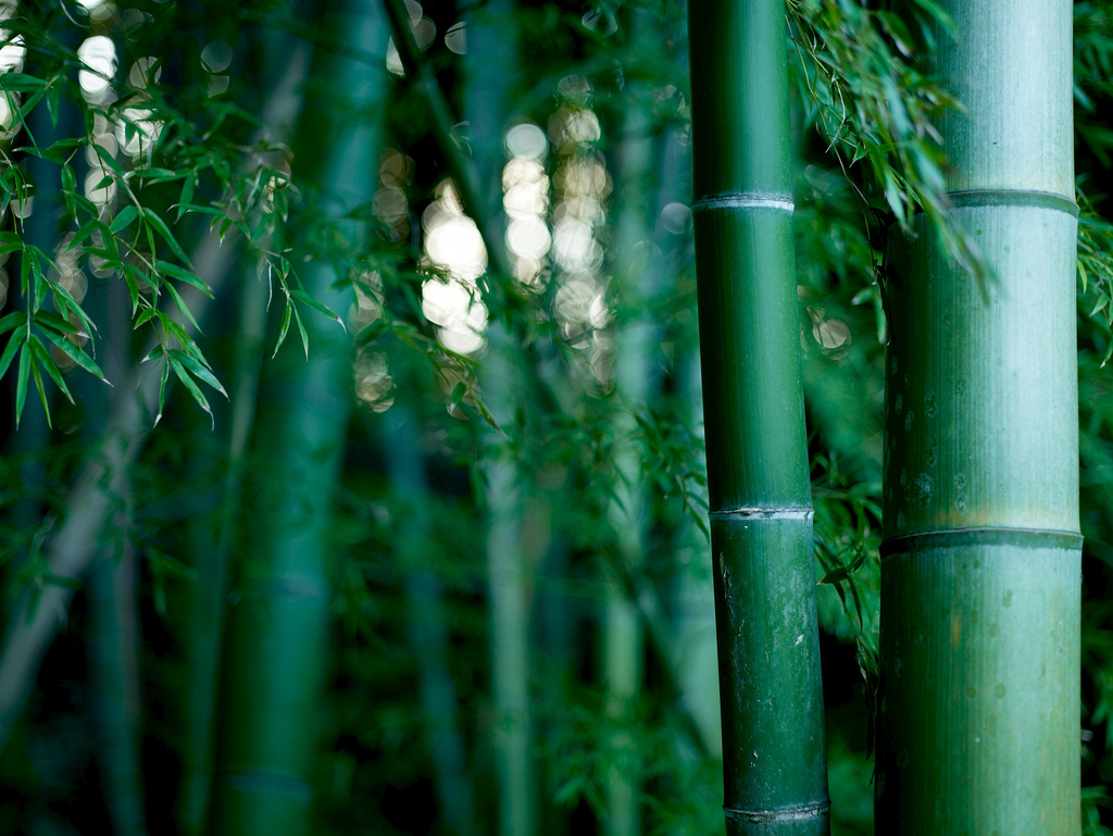 bamboothicket