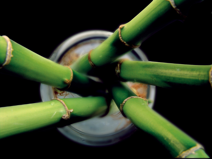 Kimberly-Clark Company to Begin Using Bamboo in Paper Products