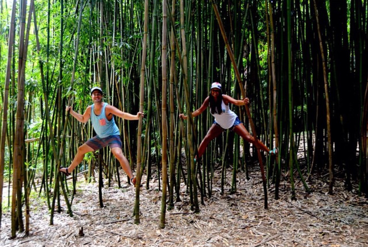 cariloha-interns-bamboo-forest